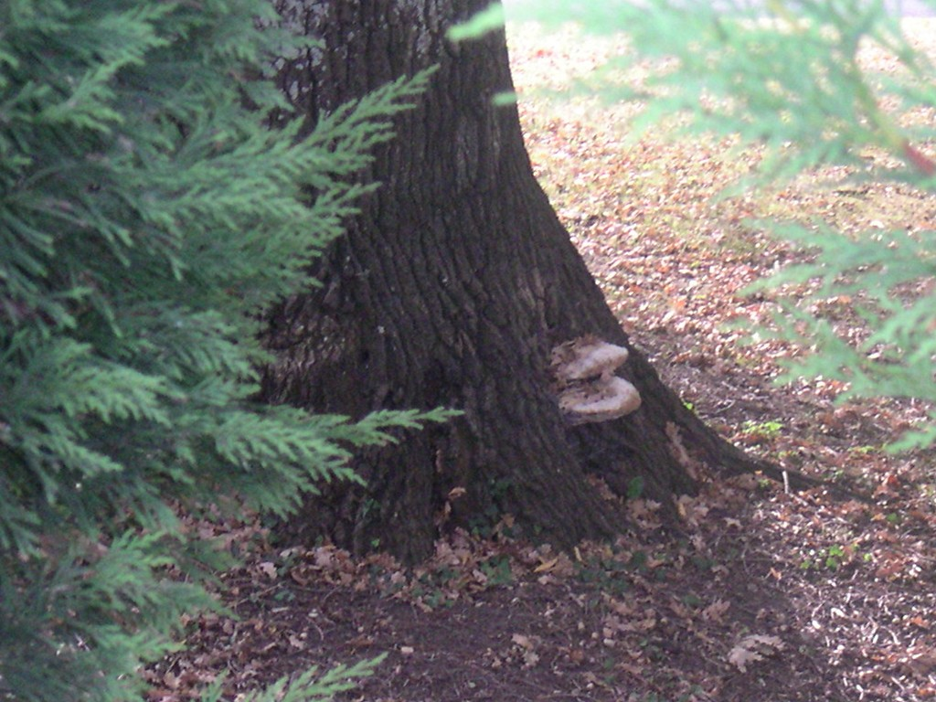 La Mort du Chêne